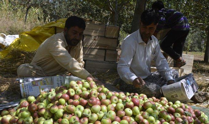 Major losses for Kashmir's apple industry during lockdown
